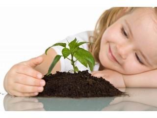 10 лучших растений для детской комнаты
