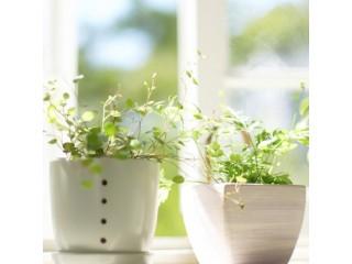 Уход за комнатными растениями во время отпуска