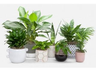 Классификация комнатных растений по видам