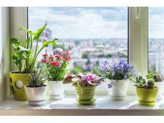 Классификация растений по условиям ухода