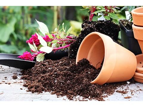 Грунт и растения