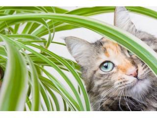 Комнатные растения и животные