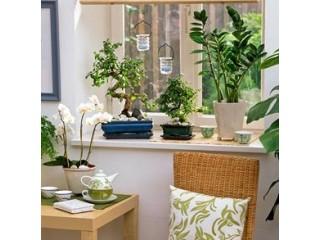 Идеальные сочетания растений