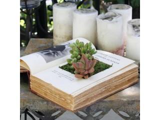 Растения и книги