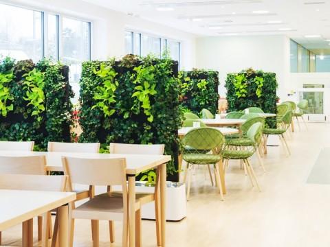 Растения для ресторанов, кафе, баров