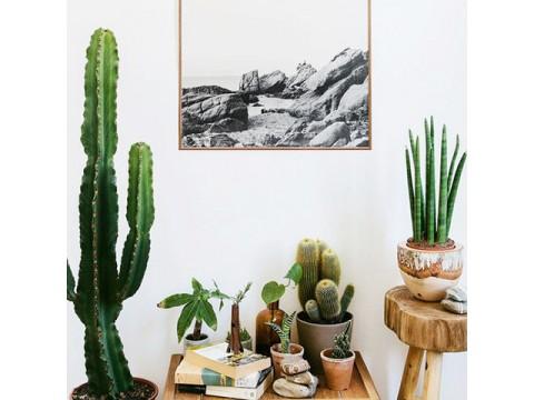 Растения в интерьере