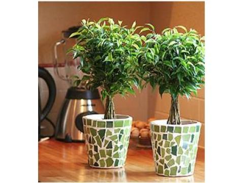 Растения в вашем доме