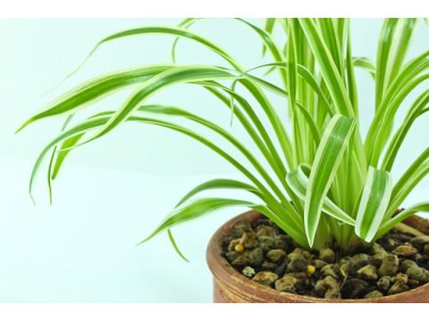 Польза и вред комнатных растений