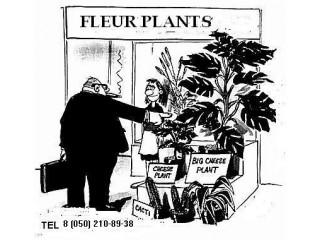 Общие рекомендации по выбору и уходу за растениями