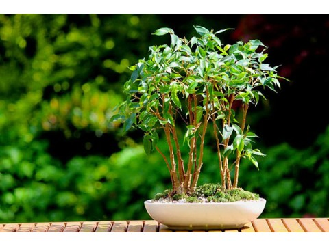 Сезоны года и растения