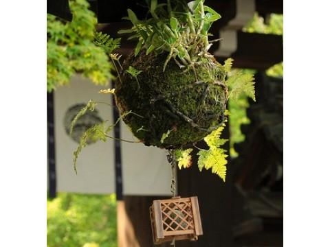 Подвесной сад Федора Ван Дер Валка. Кокедама.