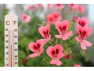 Температура воздуха для комнатных растений