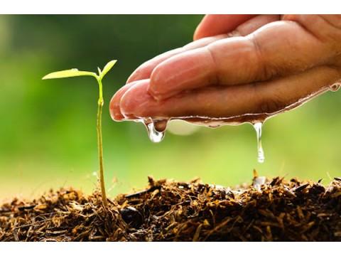 Вода и растения