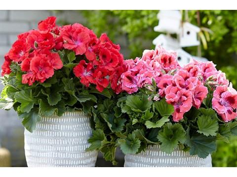Цветение комнатных растений
