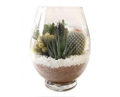 Мини сад из кактусов и суккулентов в стеклянной вазе. Оригинальный подарок.
