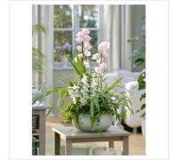 Композиция с орхидеей Цимбидиум