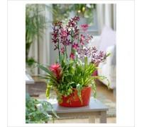 Композиция с орхидей Камбрия