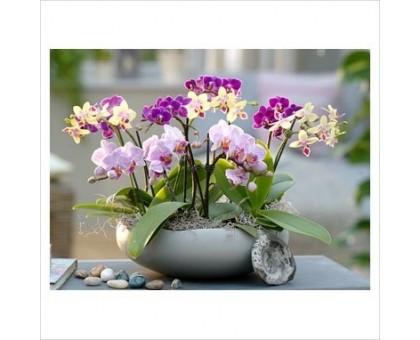 Композиция с орхидеями Фаленопсис