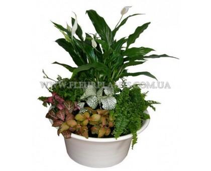 Мини сад в керамической плошке