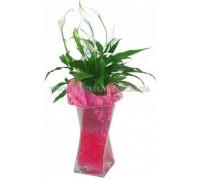 Спатифиллум в вазе