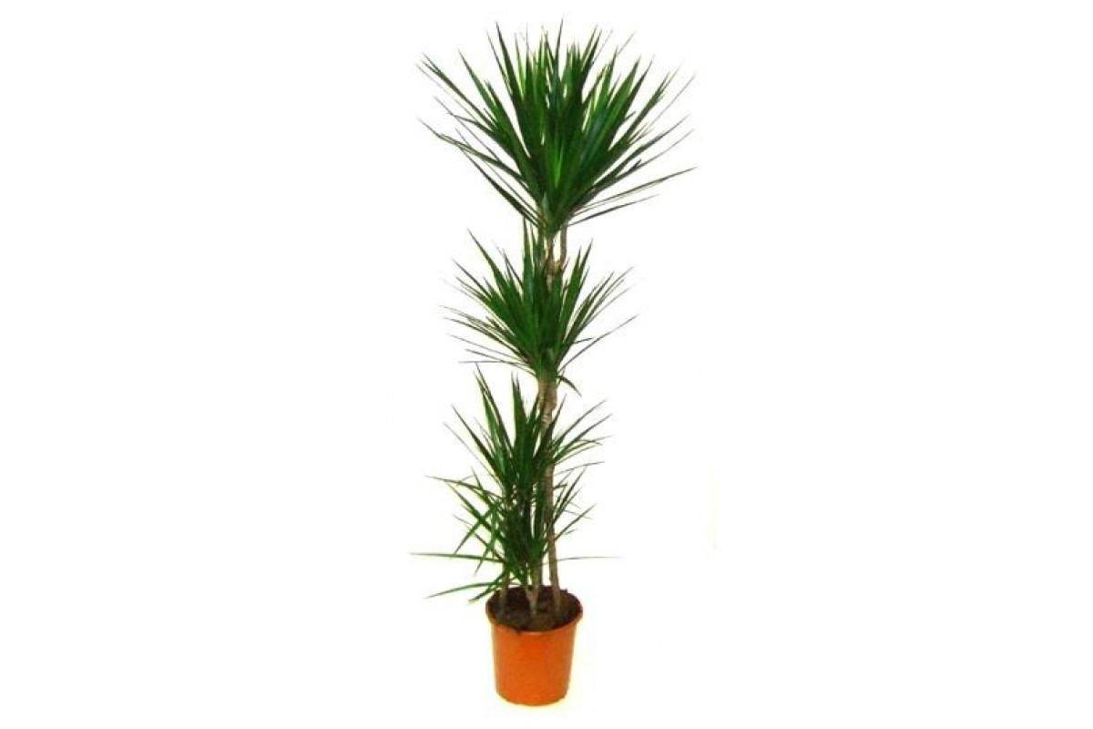 купить рассаду комнатных растений
