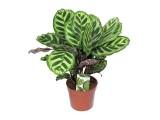 Растения до 1 м