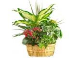 Композиции из растений