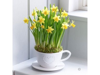 Заказ цветущих растений к 8 Марта