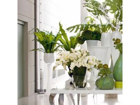 Фитодизайн. Цветущие растения к 8 Марта
