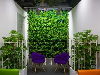Озеленение и фитодизайн. Наши работы
