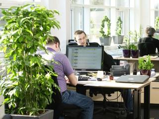 Комплексное озеленение офисов